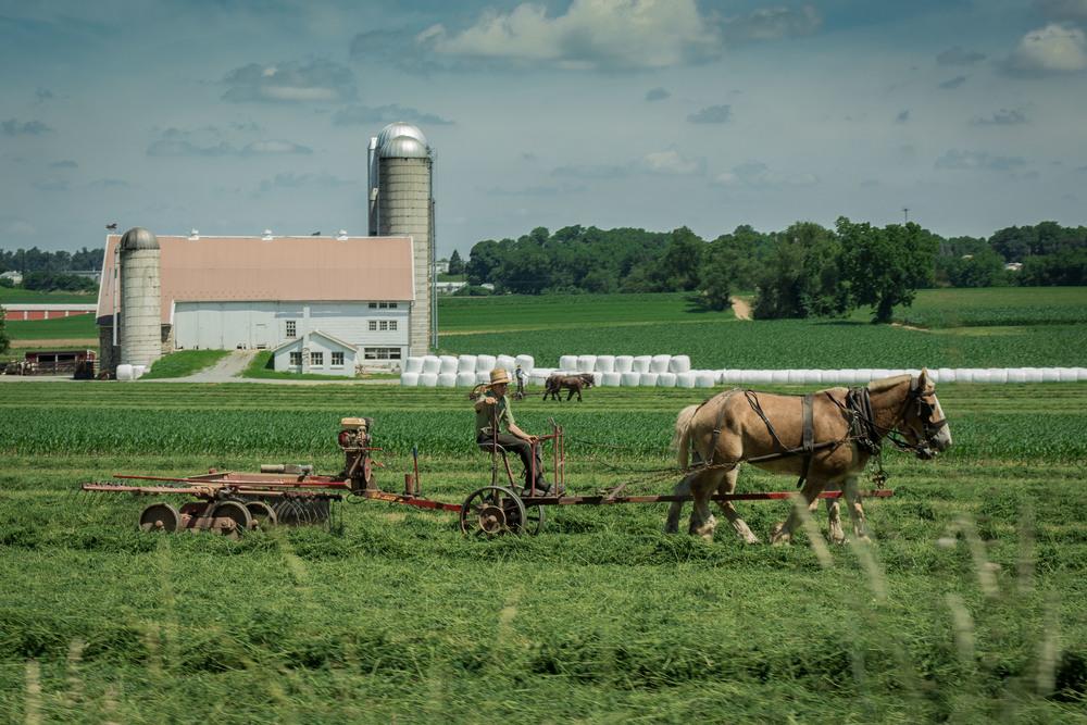 Amish farmers were working everywhere, Southeastern PA