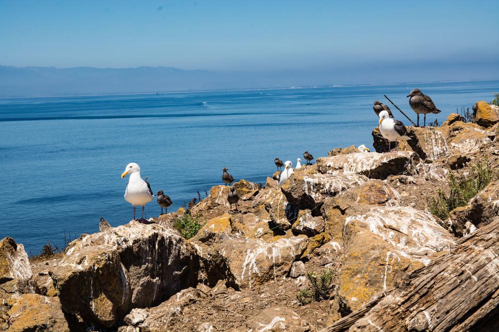 Gulls and poo. Poo and gulls.