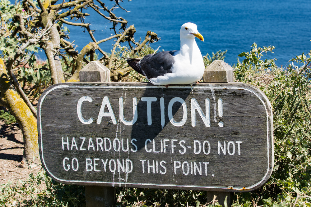 The gulls know what they are talking about.