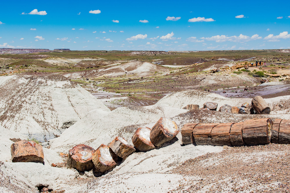 Petrified Tree, sliced up by nature.  Cool.