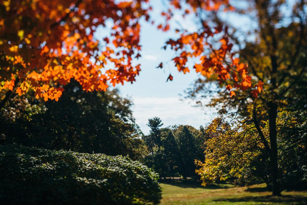 Awbury_Arboretum_Engagement-0014.jpg