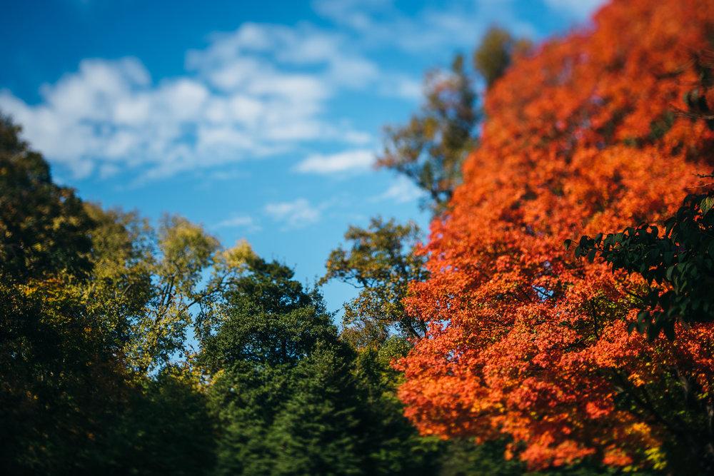 Awbury_Arboretum_Engagement-0015.jpg
