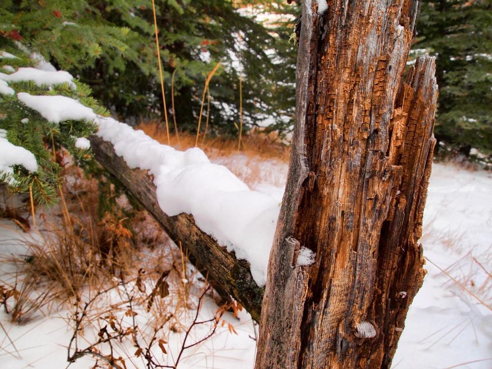 Banff 92.jpg