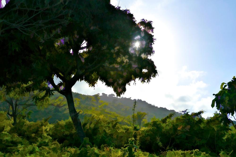 Honduras 23.jpg