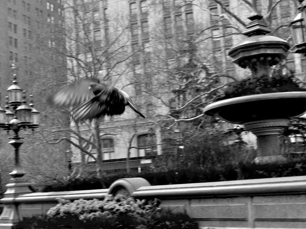 New York 2007 6.jpg