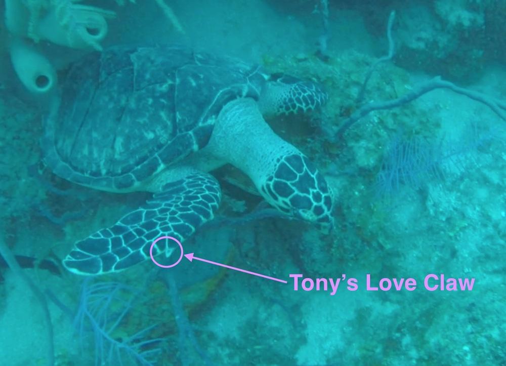 Tony's Love Claw