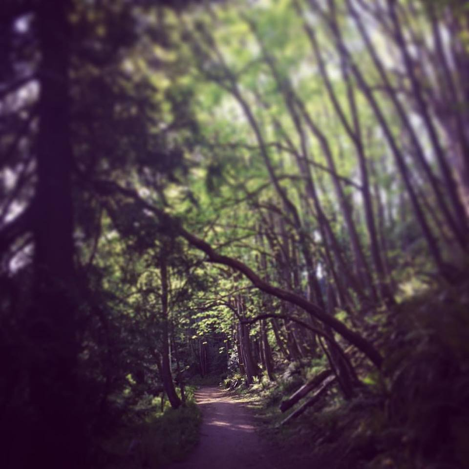 Ravenna Park, Seattle Wa