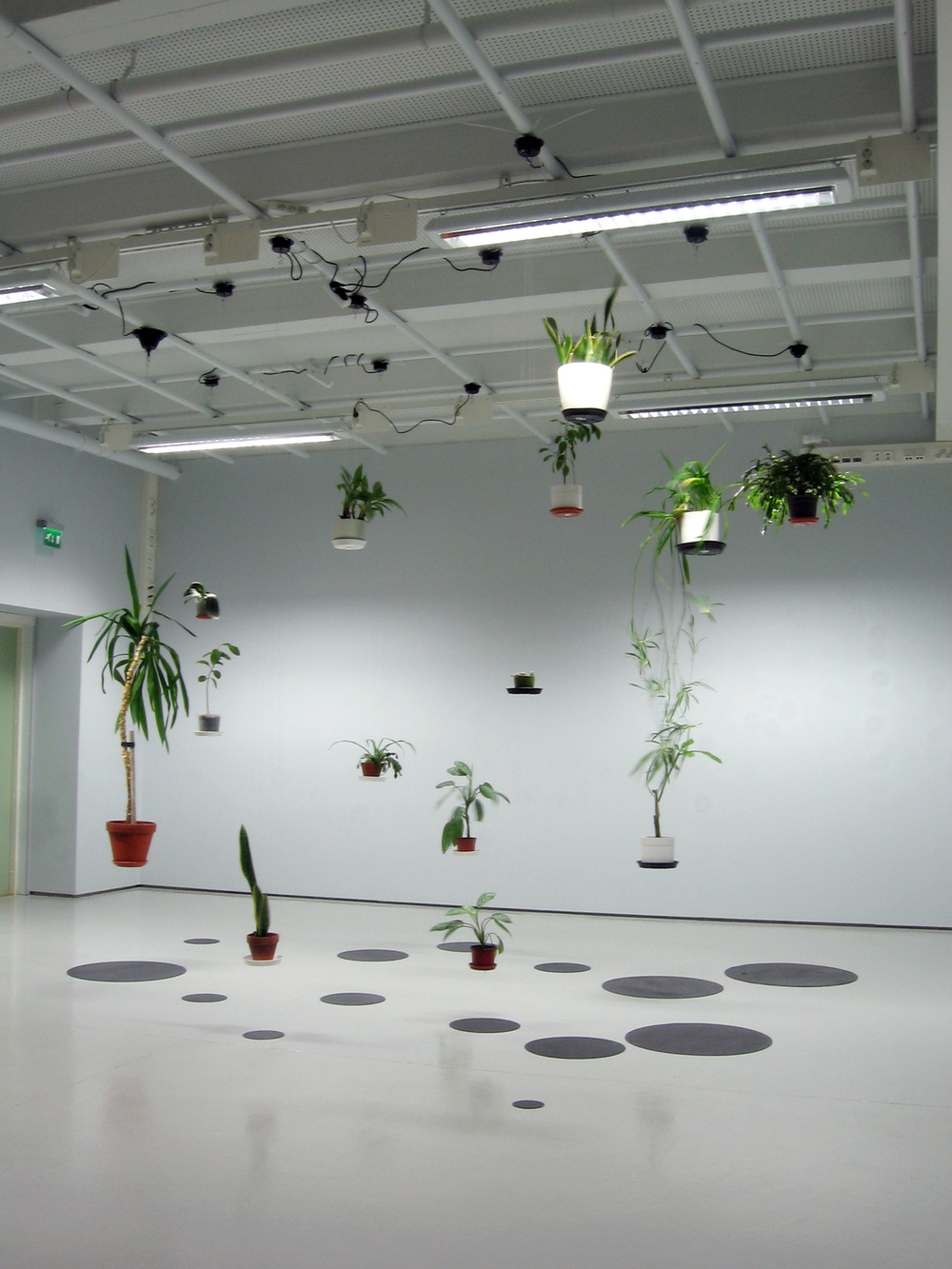 Field Trip for Houseplants, 2010
