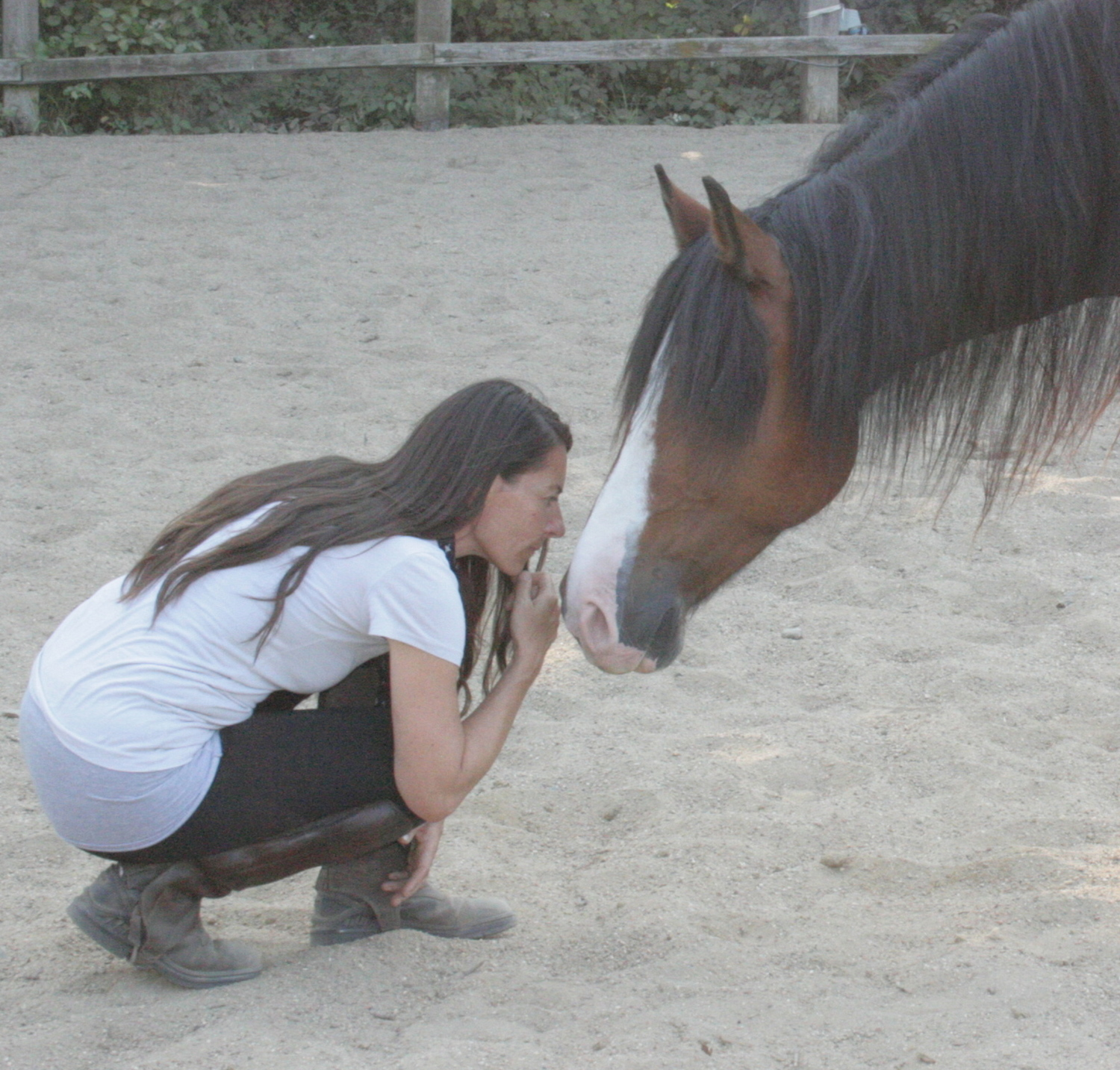 Dido Fisher NLP Trainer and Horse Whisperer