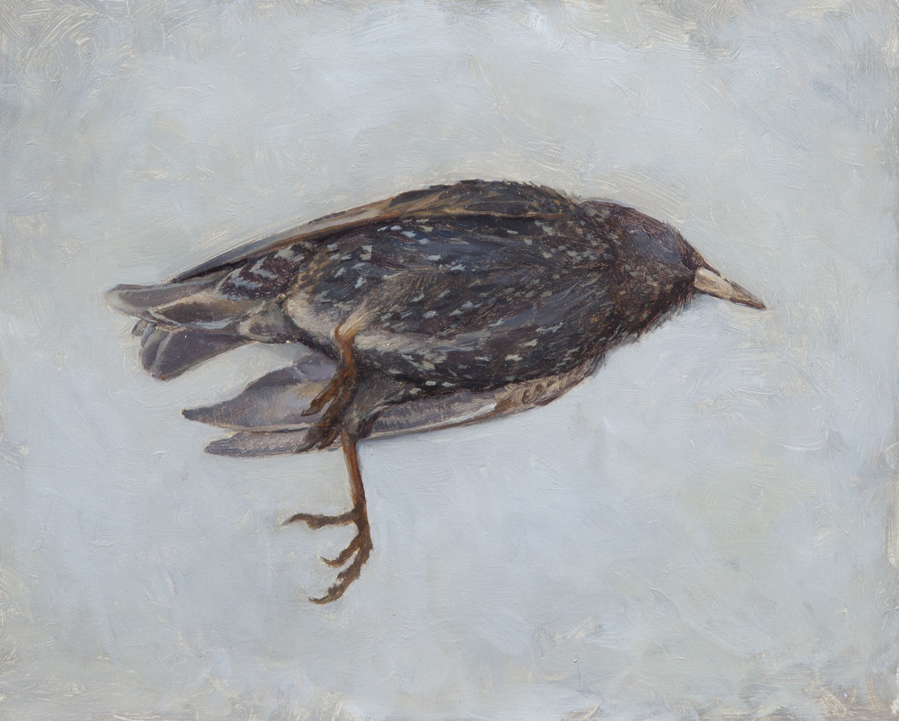 Dead Bird. 8x10. Oil on Panel.