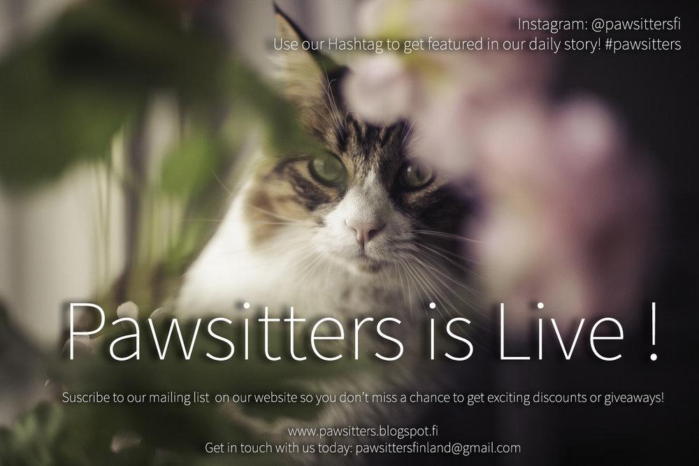 pawsitters is live.jpg