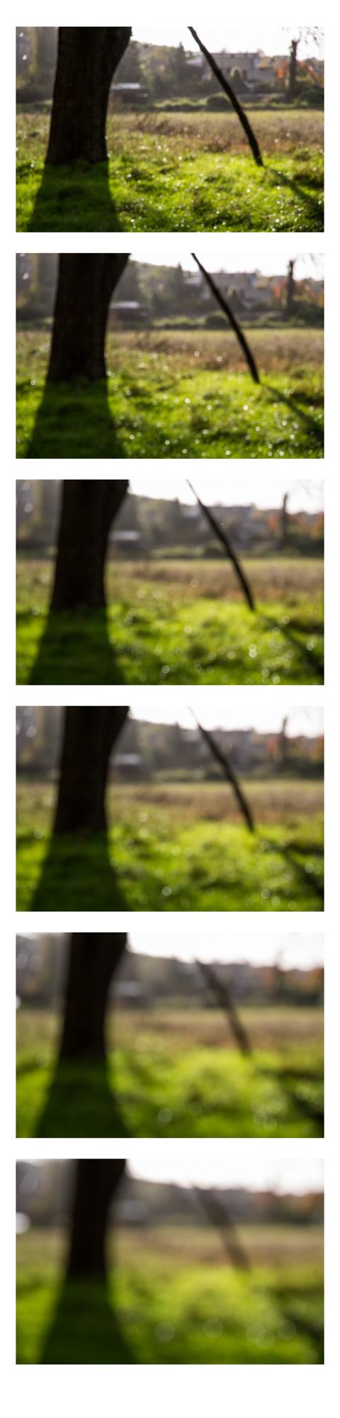 out focus 5.jpg