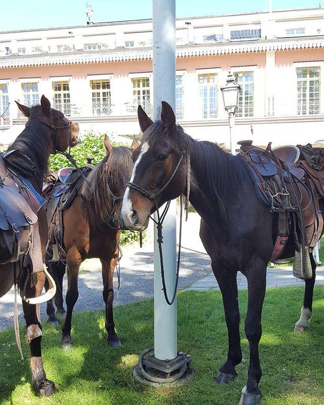 Hästarna är här och inspekterar trädgården inför måndagens #cowboyfest2017 #restauranghasselbacken #scandichasselbacken #Djurgården 🤠👌🐎