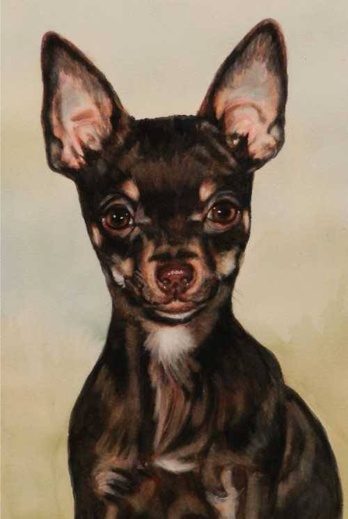 Portrait of Chocolate
