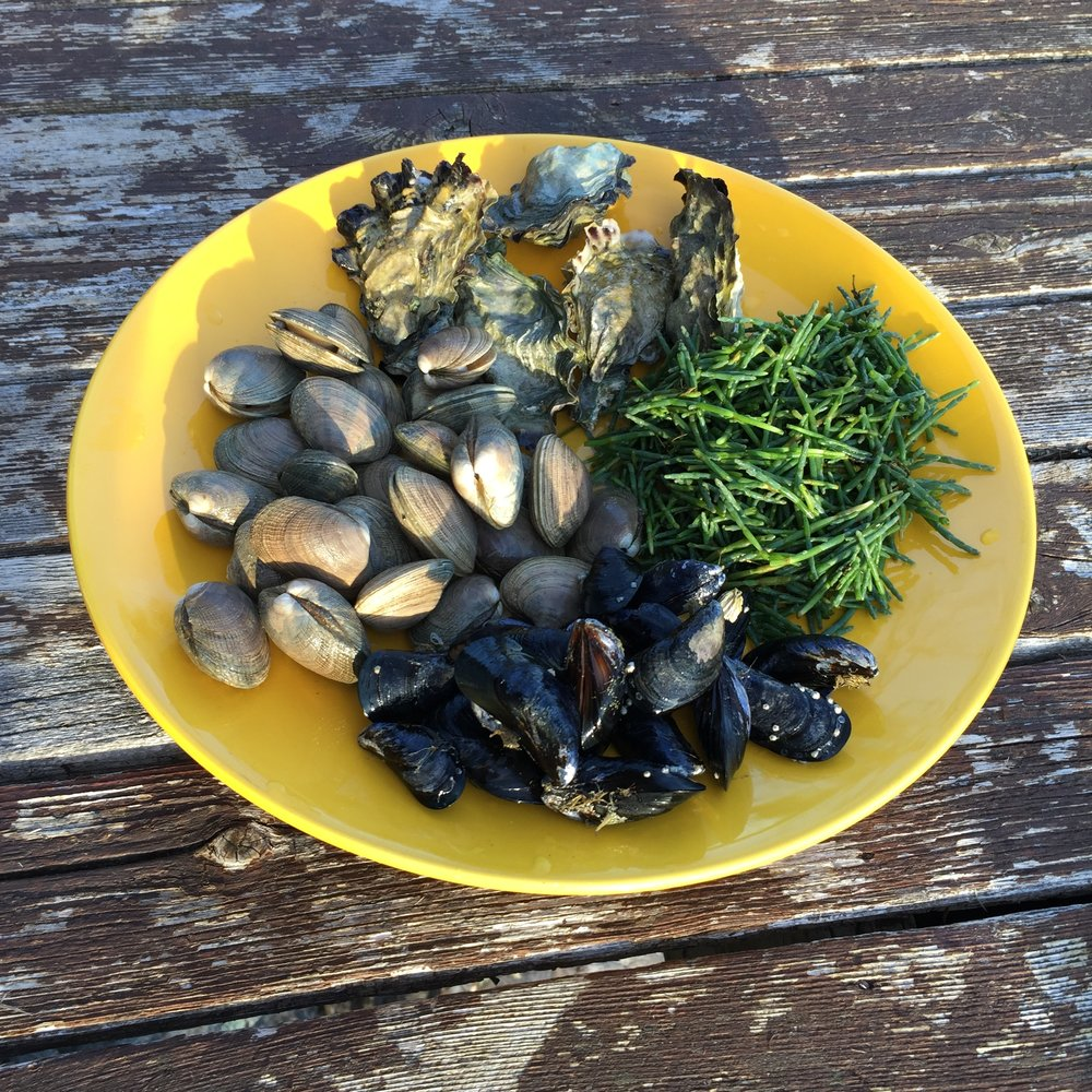 Bounty from a recent sea-side forage: oysters, clams, mussels & sea asparagus