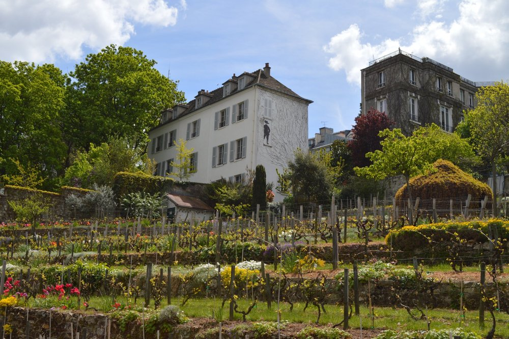 Montmartre Vineyard in Paris