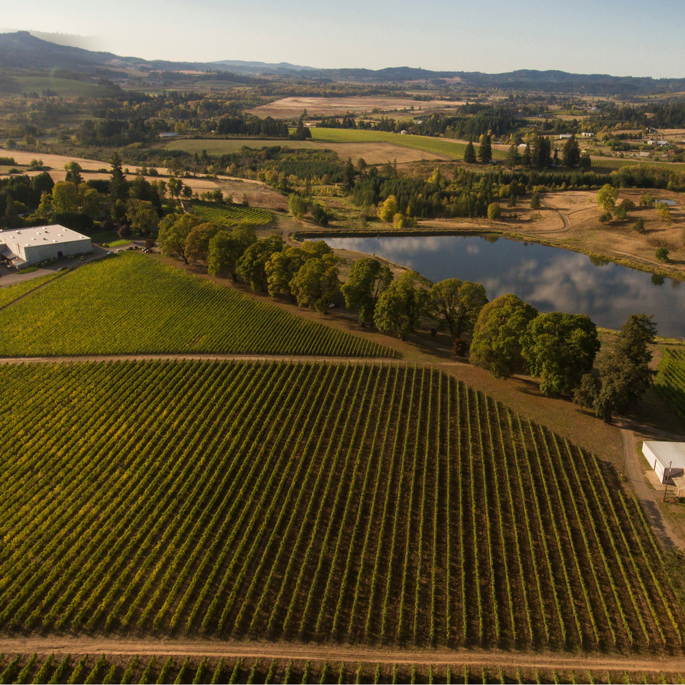 Montinore's 200 acre biodynamic estate in Oregon's Willamette Valley       © 2017 Montinore Estate