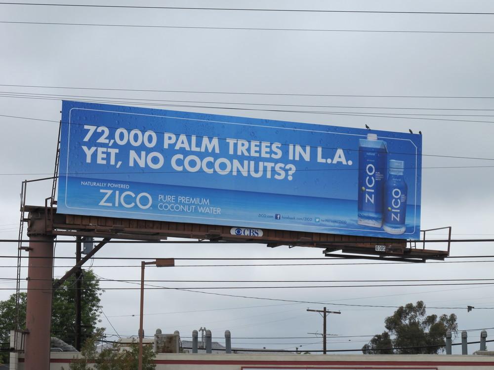 PalmTrees copy.JPG