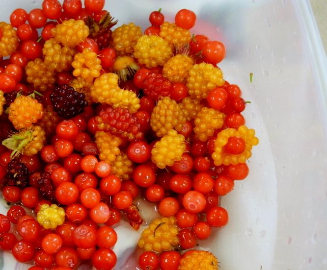 Mixed berry bounty.JPG