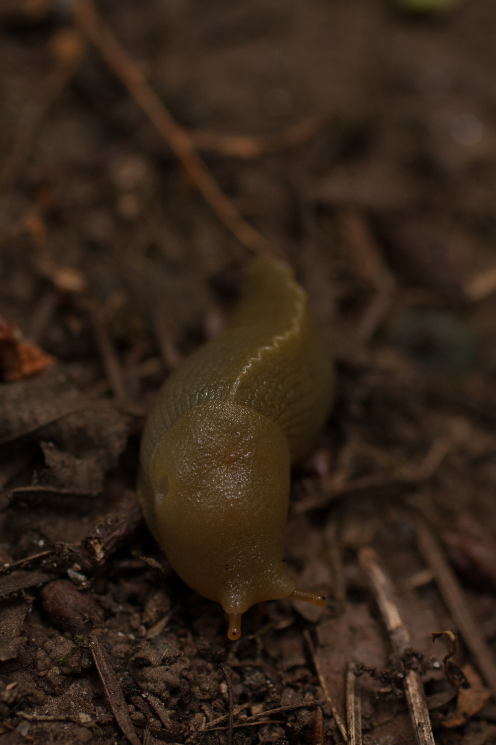 There were also many slugs.