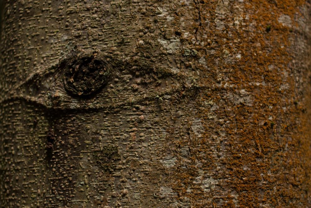 VENDOVI ISLAND-027.jpg