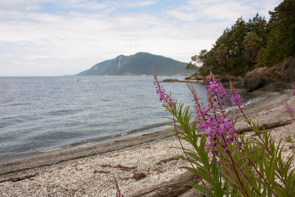 Fireweed and the view from Sunset Beach