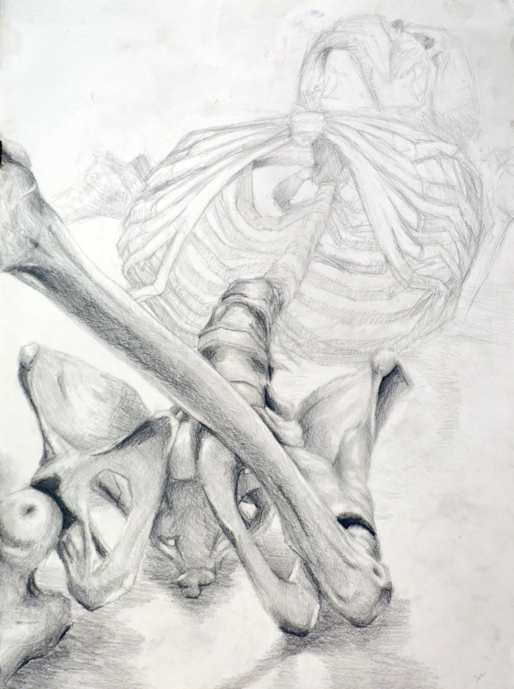 Anatomy and Structure course. Pencil on paper.
