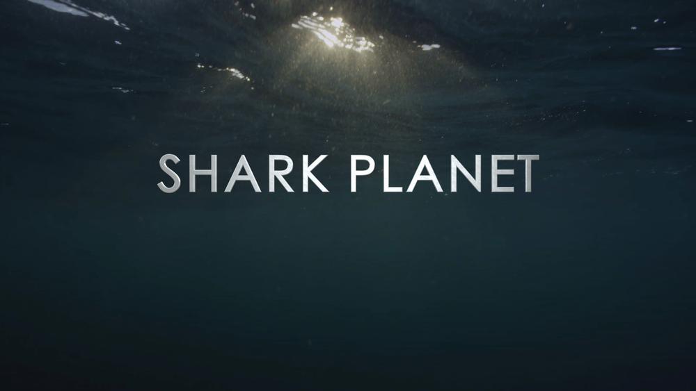 Shark6.png