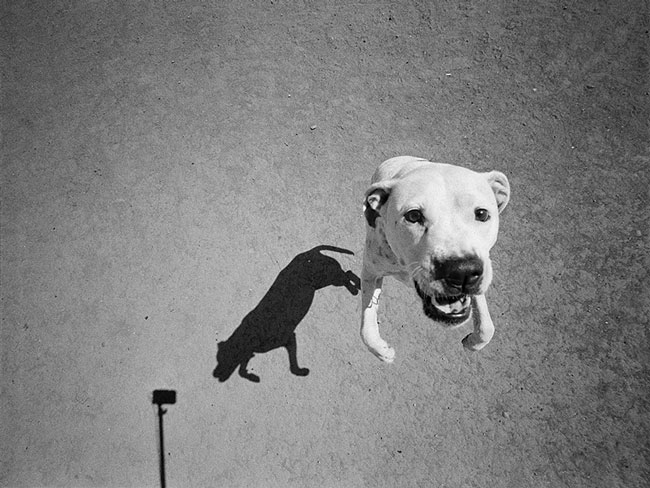 1-thomas-roma-modo-cane-dogs-shadows-perros-sombras-photos-fotos.jpg