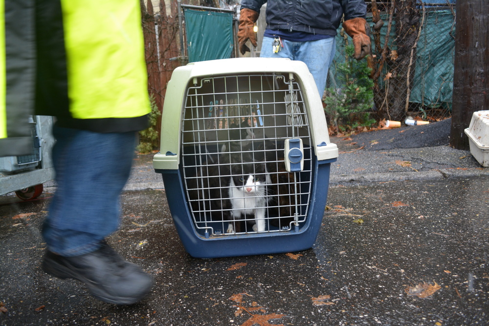 There were an estimated 20 cats in the home, SPCA officials said.