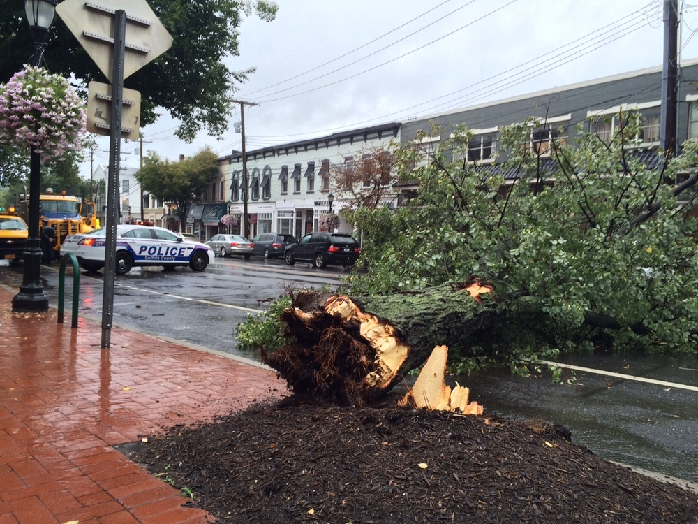 A large fallen tree is blocking both lanes of Main Street just east of Route 110 in Huntington village on Aug. 11. long islander news photo/carl corry
