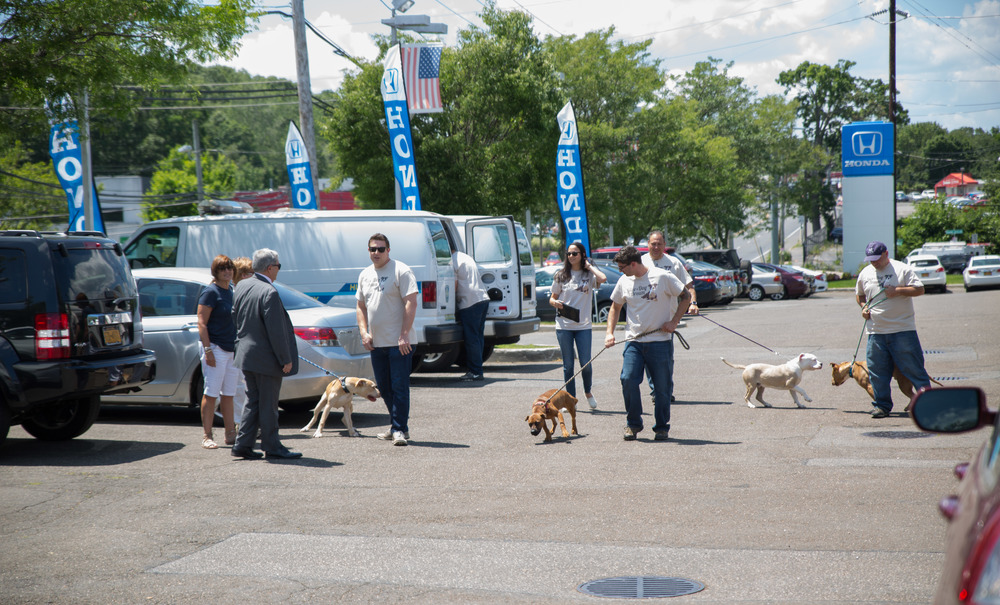 The Huntington Town Animal Shelter hosted an adoption event at Huntington Honda on Wednesday.