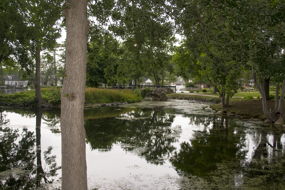 The pond at Heckscher Park is no stranger to various forms of animal wildlife.