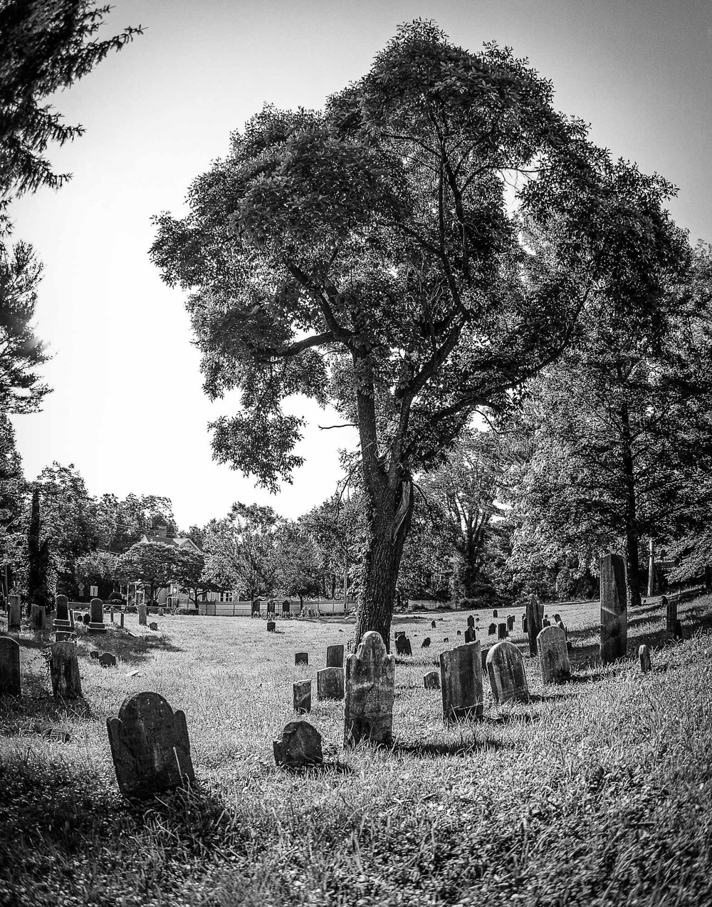 """Old Burial Hill Cemetery,"" by Kenny Ng, gives a dynamic approach to photography by using a fisheye lens to distort the image. Photo by Kenny Ng"