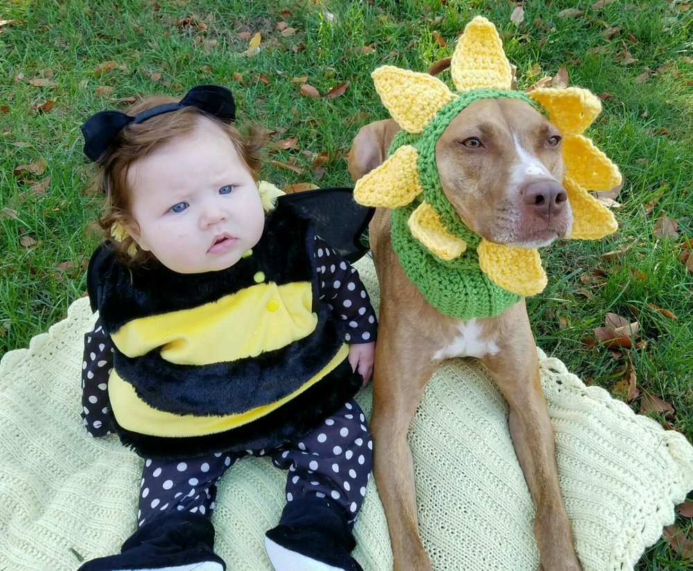 Lorelei Brynn, 7 months old, of Northport, dressed as a bumblebee this Halloween. She's pictured above with her dog, Cinnabon, who dressed as a sunflower as the two got ready to trick-or-treat.