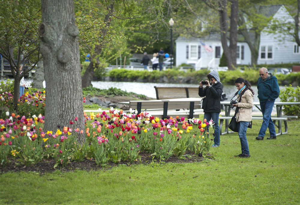Over 20,000 tulips in a rainbow of colors were planted around Heckscher Park, a sight that has drawn a massive crowd of visitors since the festival began in 2001.