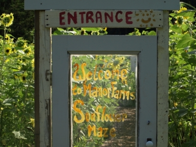 The entrance to the sunflower maze is an original door from the historic farmhouse on the Manor Road property.   Long Islander News photos/Connor Beach