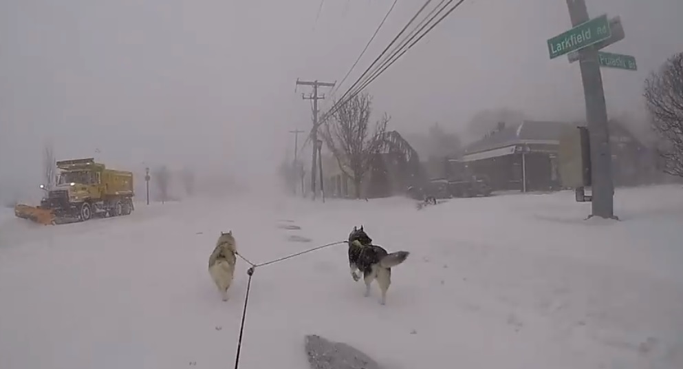 Siberian huskies Summer, left, and Tucker pull Paul Kearney down Larkfield Road in East Northport last Thursday, as Winter Storm Grayson hit the area with strong winds and snow.