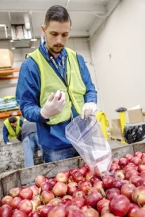 PSEG's Paul De Benedetto of East Northport helped sort and pack apples for delivery to food pantries across Long Island.