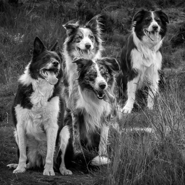some of the doggy style 'residents' looking windswept and arty!