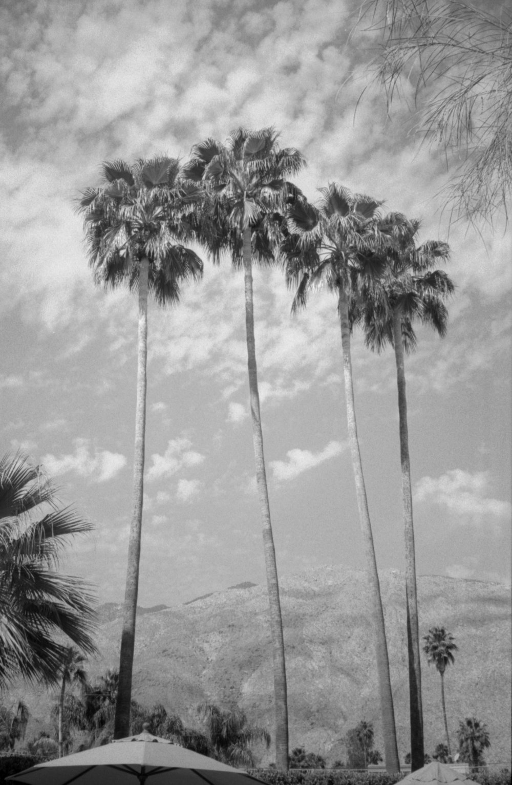 tallpalms.jpg
