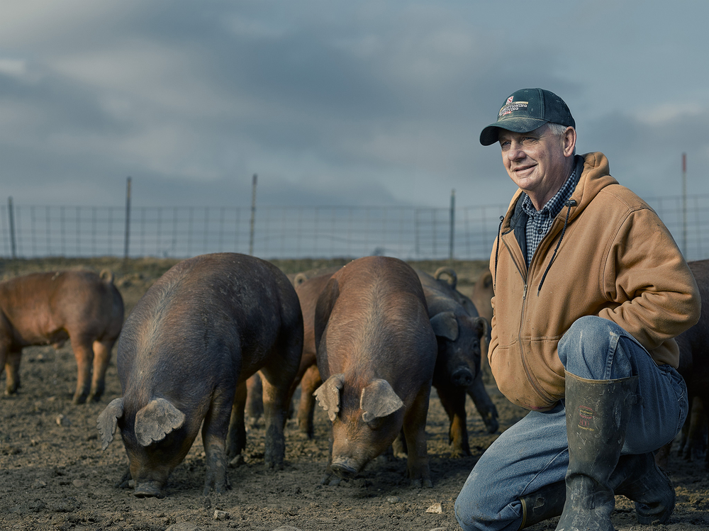 """Routine observation"" is a big part of Craig and Amy's day. They are constantly monitoring their pigs to make sure they are healthy, comfortable, and productive."