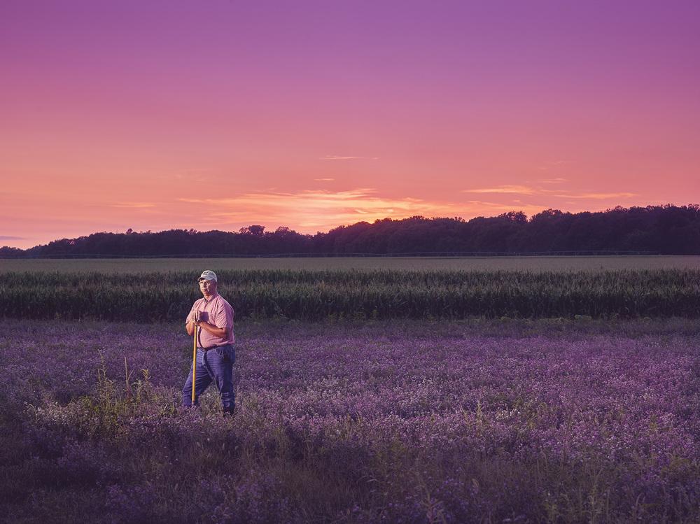 kansas alfalfa field