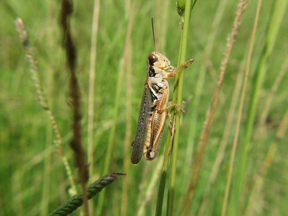 grasshopper_jgonzalez.jpg