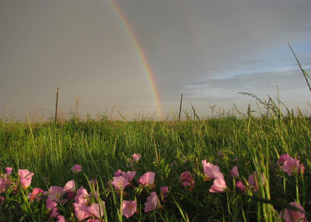 We Protect Prairie Lands -