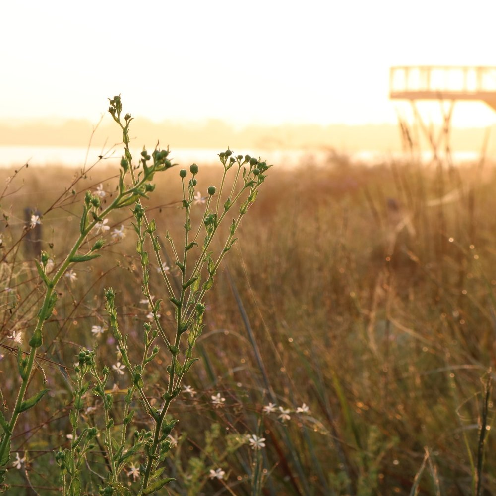 Native Grasslands Restoration -