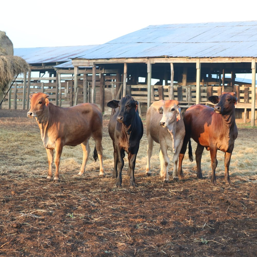 Sustainable Grazing -