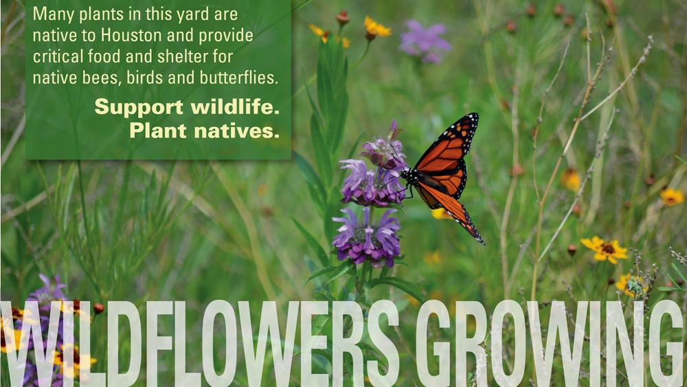 These attractive yard signs are available from the Native Plant Society of Texas - Houston Chapter.
