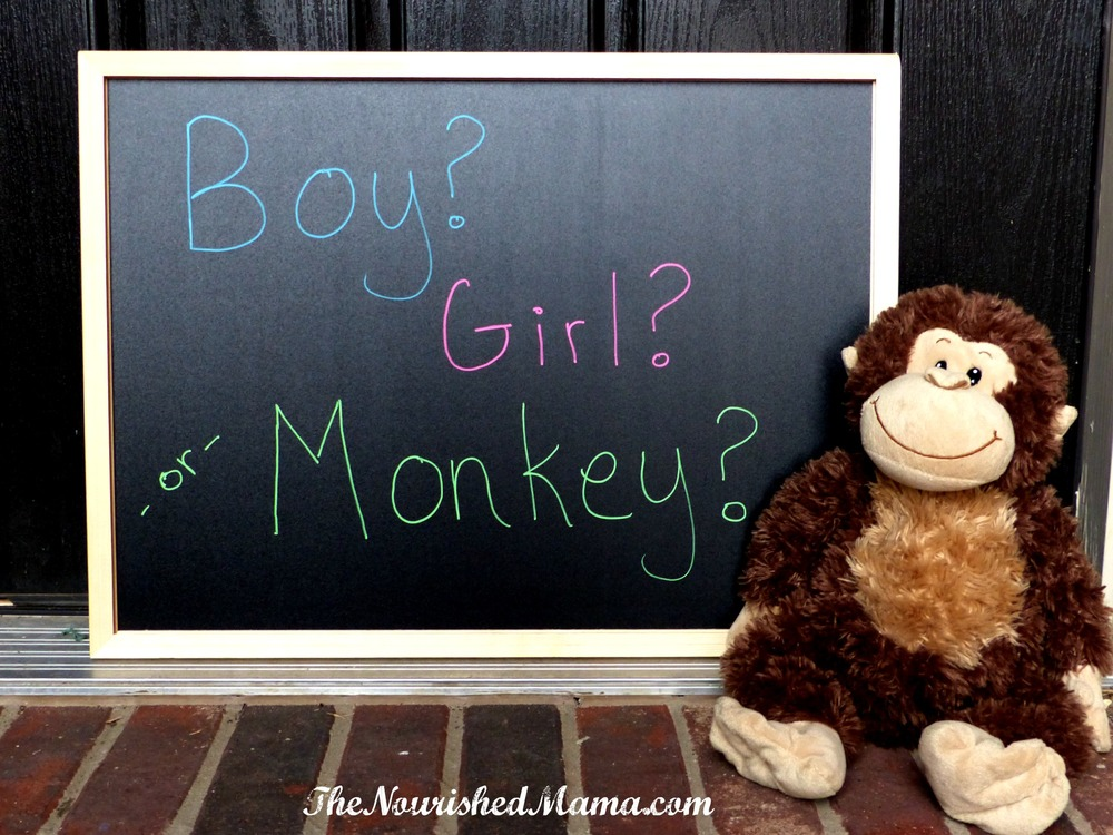 Boy, Girl, or Monkey Gender Reveal -- The Nourished Mama