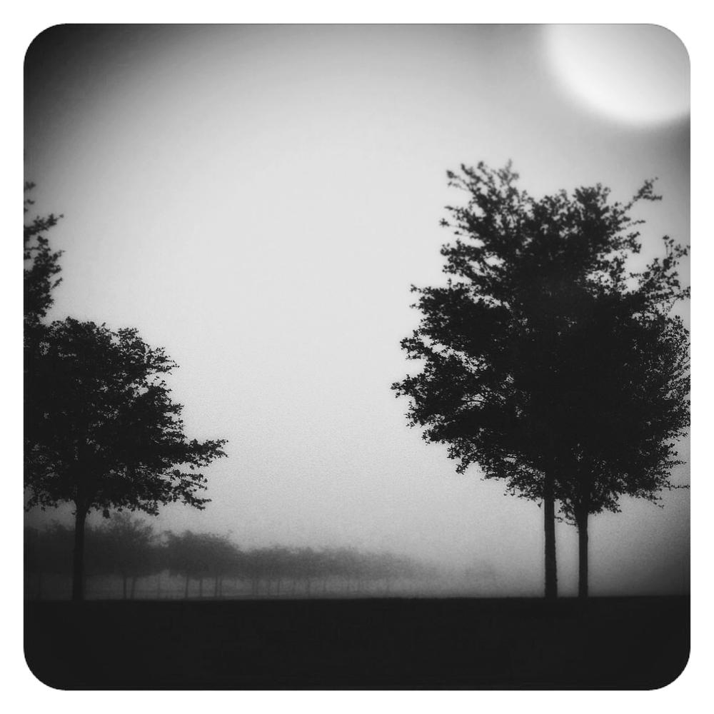 Fog_137.jpg